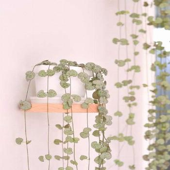 Hanging plants, creative ideas for hanging plants indoors and outdoors - indoor outdoor hanging pla